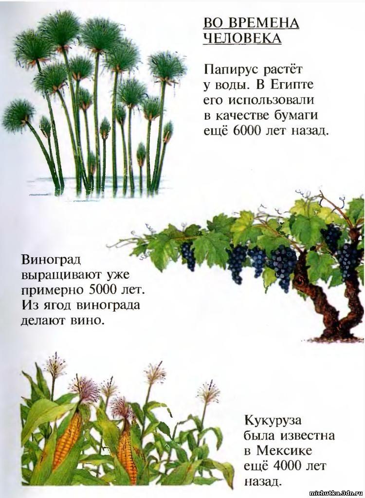все о растениях