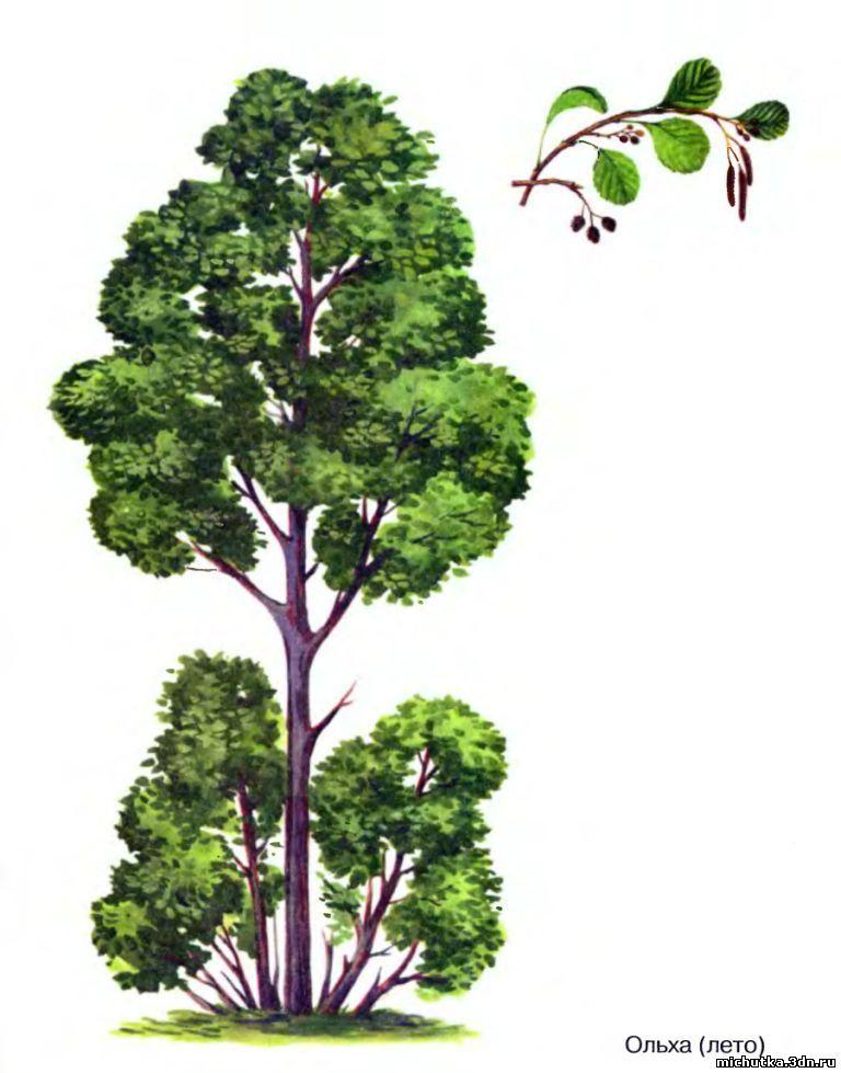 """дидактический материал """"Деревья"""""""